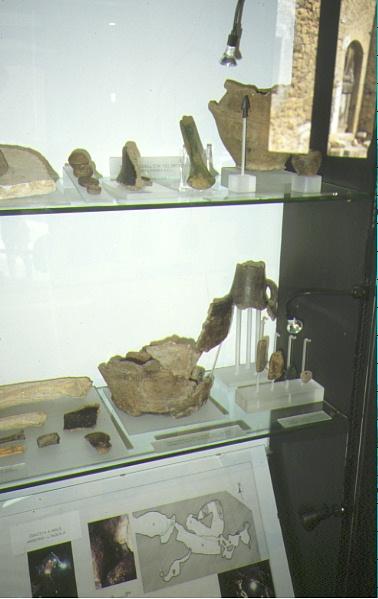 reperti esposti nel museo